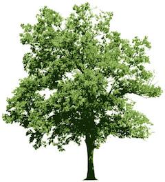 Logo for Lynn's Tree Service